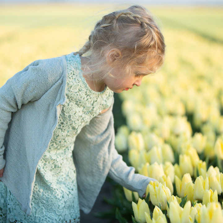 Minishoot tulpenveld